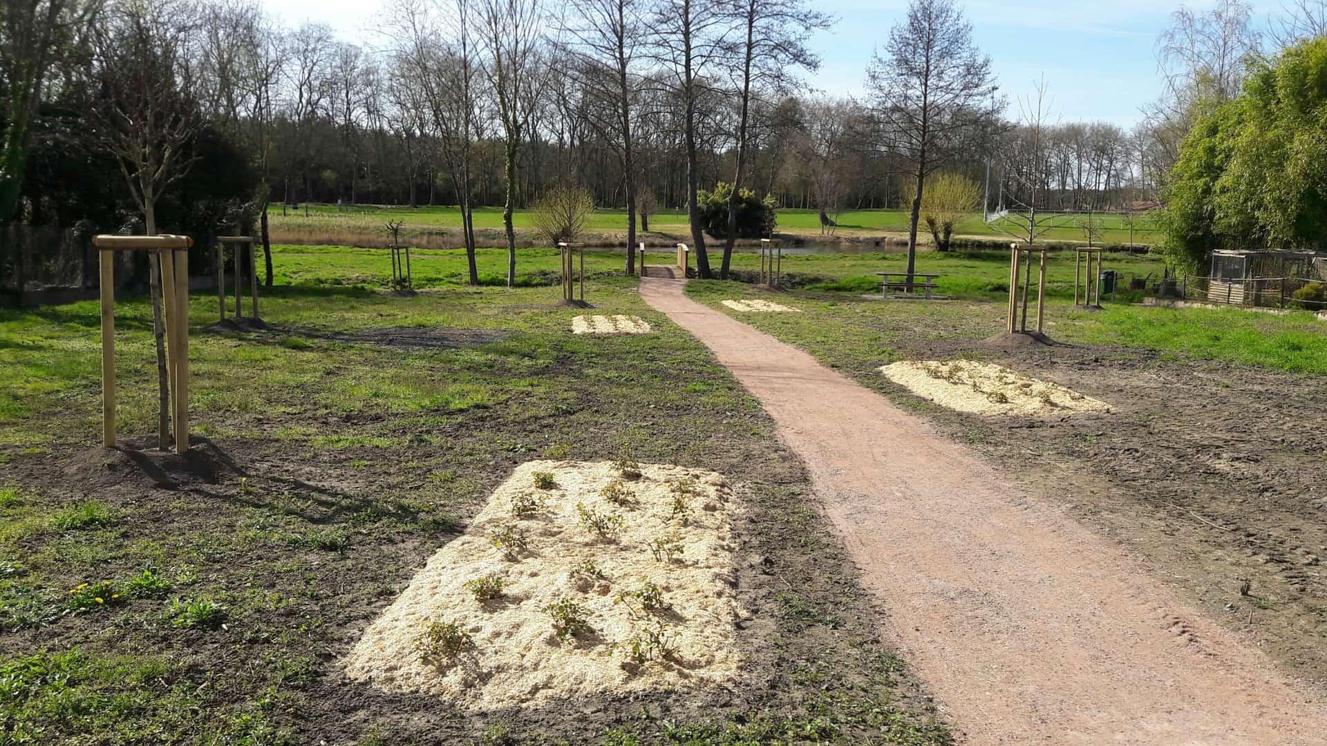 Plantation de rosiers sur bâche biodégradable